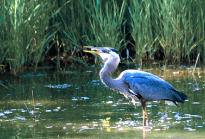 Wetlands-205x139